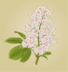 Chestnut tree flower with leaves vintage vector image vector image