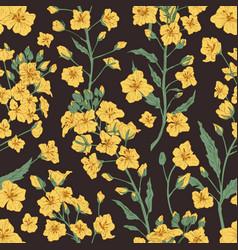 elegant seamless pattern rapeseed plant vector image