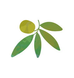 green olive on branch with leaves ecological or vector image