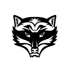 Head an angry north american raccoon front vector