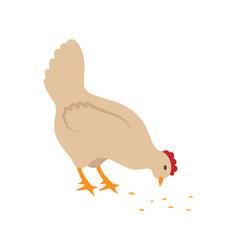 hen chicken on farm closeup vector image
