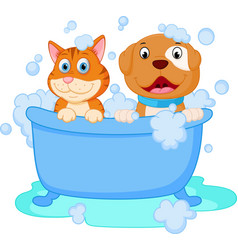 cute dog and cat bath vector image vector image