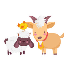 Farm animals sheep ram and chicken cartoon vector