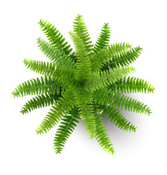fern in a pot top view vector image
