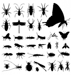 Set insect vector
