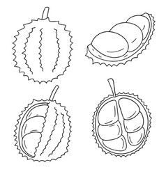 set of durian vector image