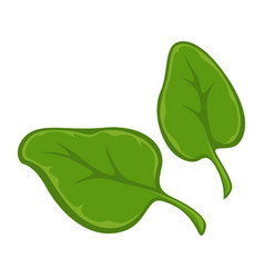 Two small green leaves vector