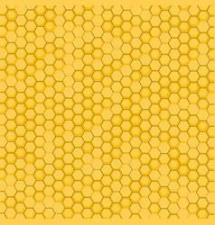 bee honeycomb vector image