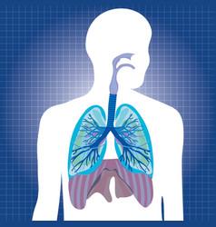 human system respiratory vector image