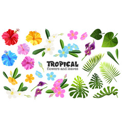 Tropical objects set vector
