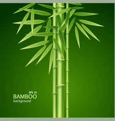 realistic 3d detailed bamboo shoots background vector image vector image