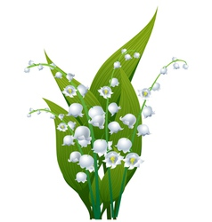 Lily of the valley vector image vector image