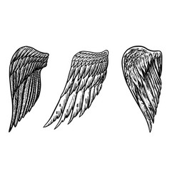 set angel wings in vintage style template for vector image