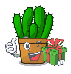 With gift spurge cactus plant isolated on mascot vector