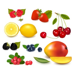 fresh summer fruit vector image