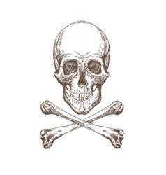 Skull and bones drawing vector image