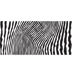 Wild zebra wave pattern with black and white vector