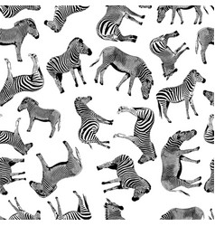 zebra hand drawn graphic vector image