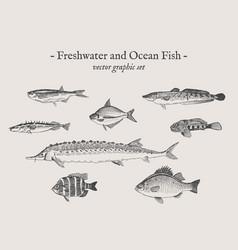 fish vintage set vector image