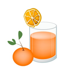 Glass of Orange Juice and Oranges Fruit vector image