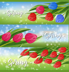spring greeting card set with blooming tulip vector image