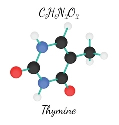 C5H6N2O2 Thymine molecule vector image