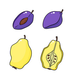 Quinces and plums isolated on white background vector