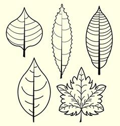 Leaves vector