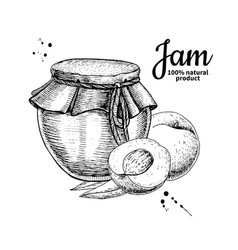 Peach jam glass jar drawing fruit jell vector