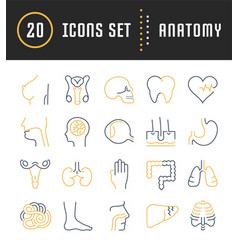 Set flat line icons anatomy vector