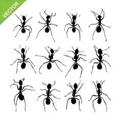 Ant silhouettes vector image vector image