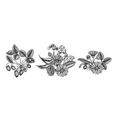 flower bouquet black and white calendula lily vector image