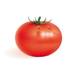 Ripe tomato vector