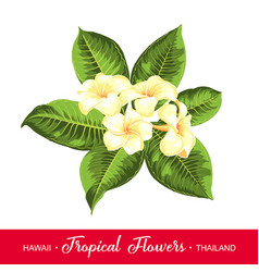 wedding garland with tropical flowers vector image