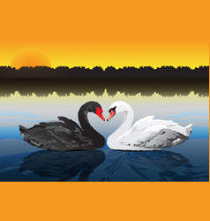 couple swan at peaceful lake vector image