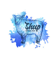 hand drawn sketch sheep natural meat background vector image