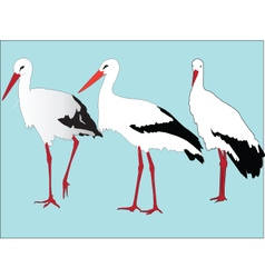 storks collection - vector image vector image