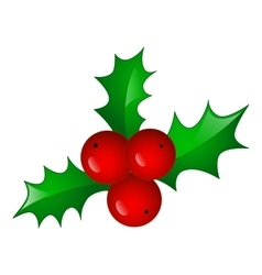 Christmas symbol holly berry vector image