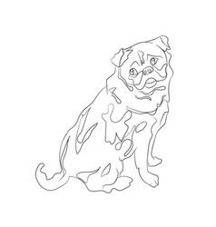 pug sitting lines vector image