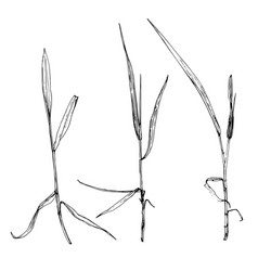 Scetch plants vector