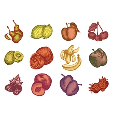 set of different fruits and berries vector image