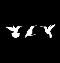 set of three detailed white hummingbird vector image