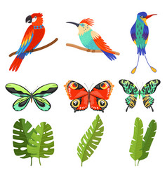 tropical collection exotic butterflies birds vector image