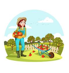 Woman or female gardener holding apples pears vector