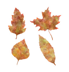 autumn leaves watercolor set vector image