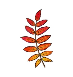 Beautiful red colored autumn rowan leave isolated vector