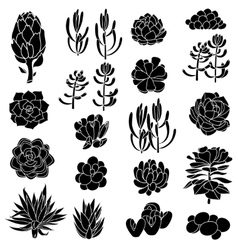 isolated black silhouettes succulents vector image