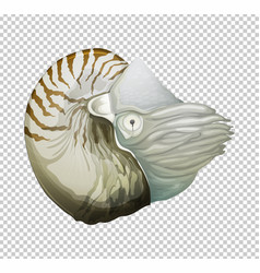Sea nautilus on transparent background vector
