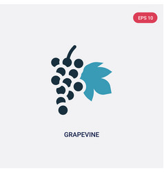 Two color grapevine icon from nature concept vector