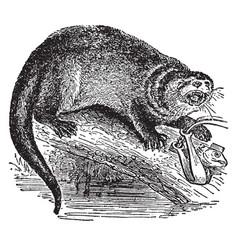 Otter vintage vector